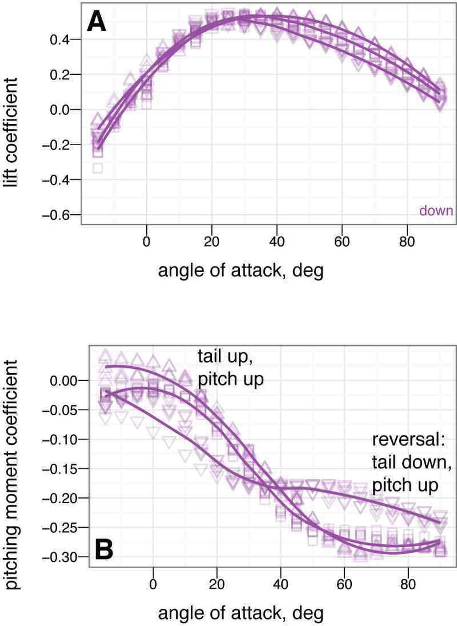 Aerodynamic characteristics of a feathered dinosaur measured