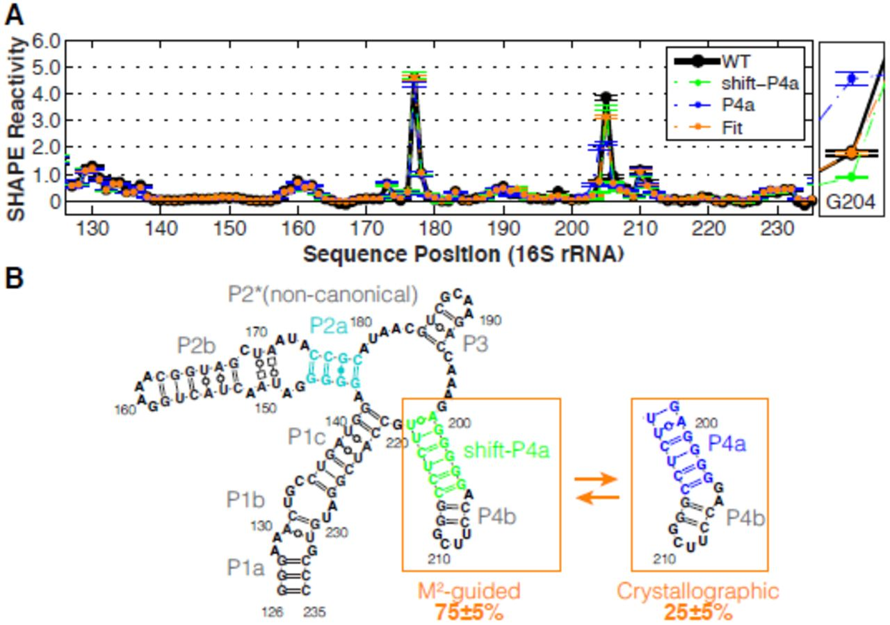Correcting a SHAPE-directed RNA structure by a mutate-map