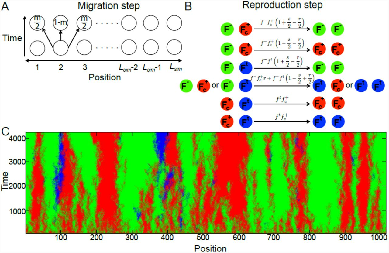 Genetic drift suppresses bacterial conjugation in spatially