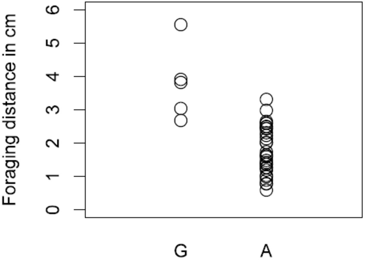 Genome-wide association of foraging behavior in Drosophila