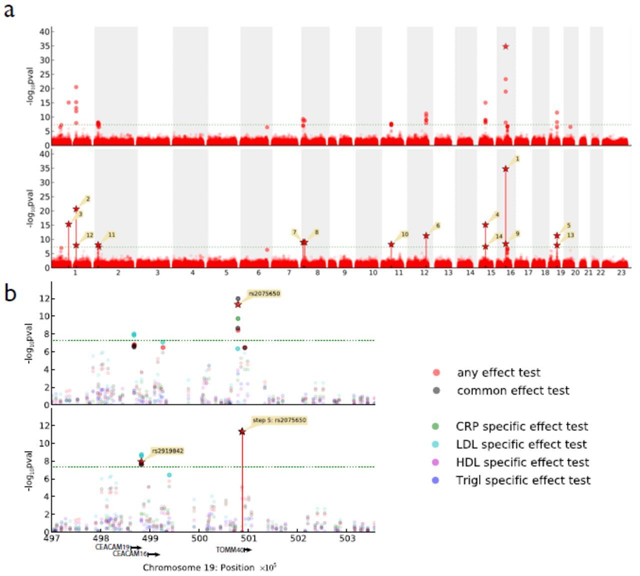 LIMIX: genetic analysis of multiple traits | bioRxiv