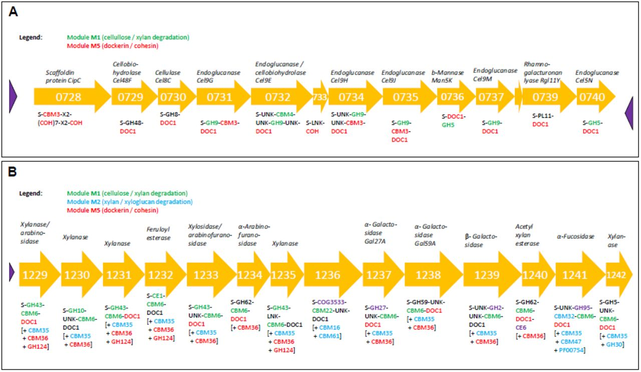 Inference of phenotype-defining functional modules of protein
