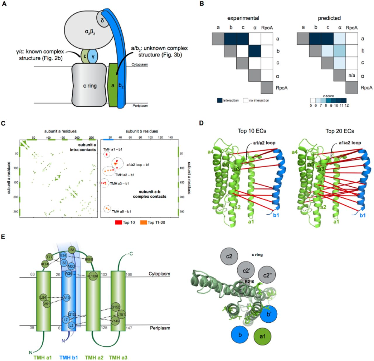 Sequence Co Evolution Gives 3d Contacts And Structures Of