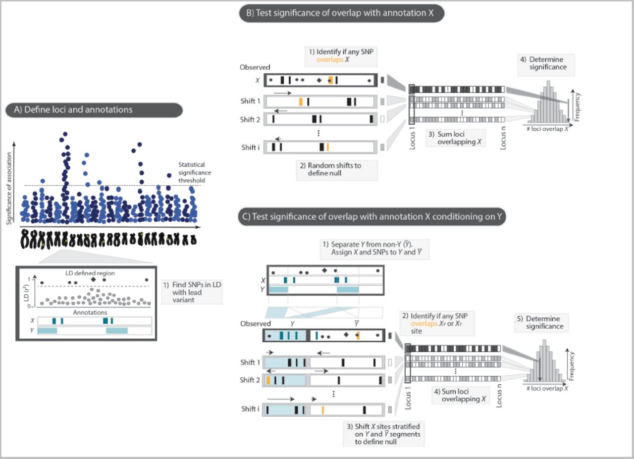 Disentangling effects of colocalizing genomic annotations to