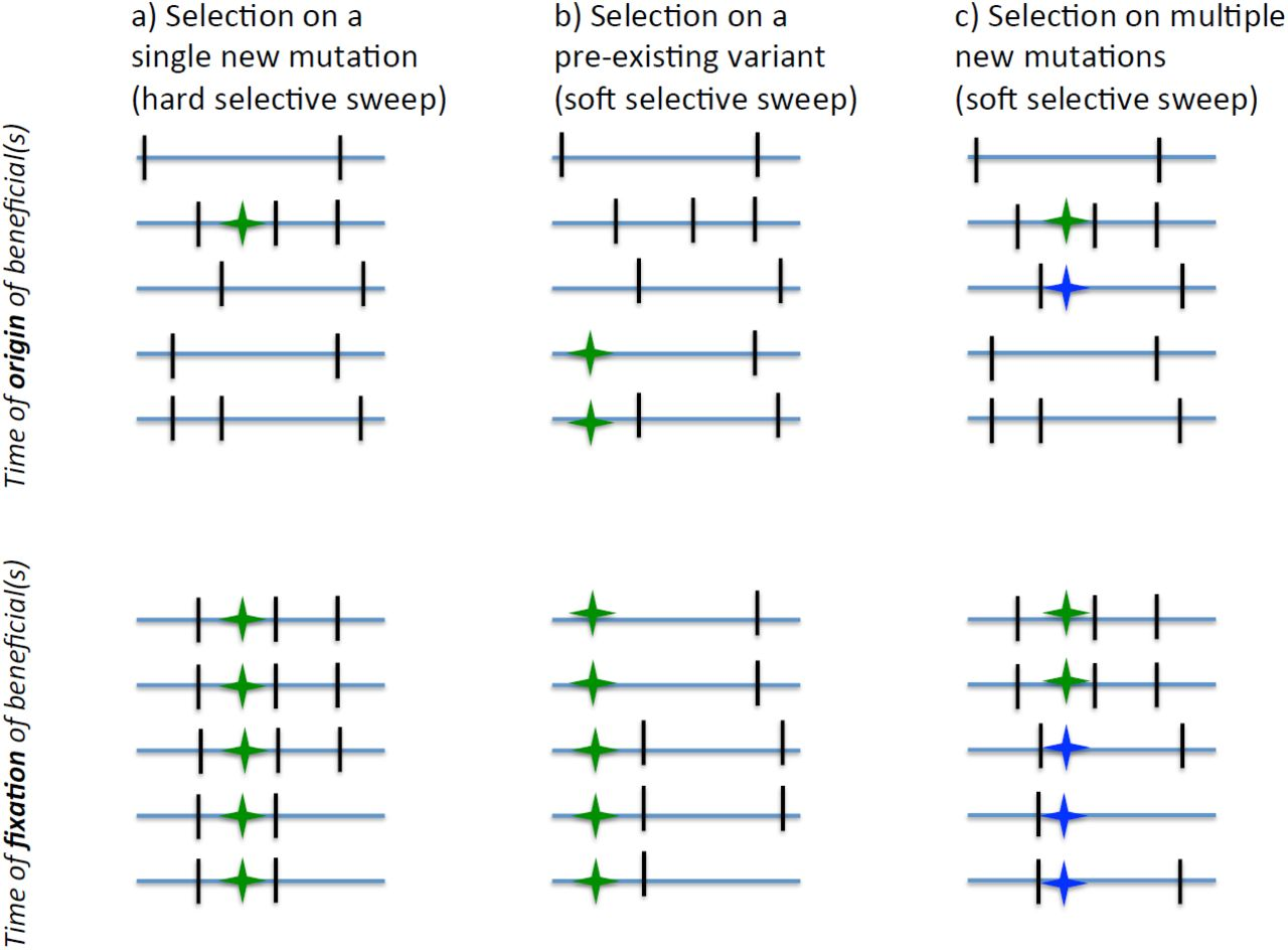 On the unfounded enthusiasm for soft selective sweeps   bioRxiv