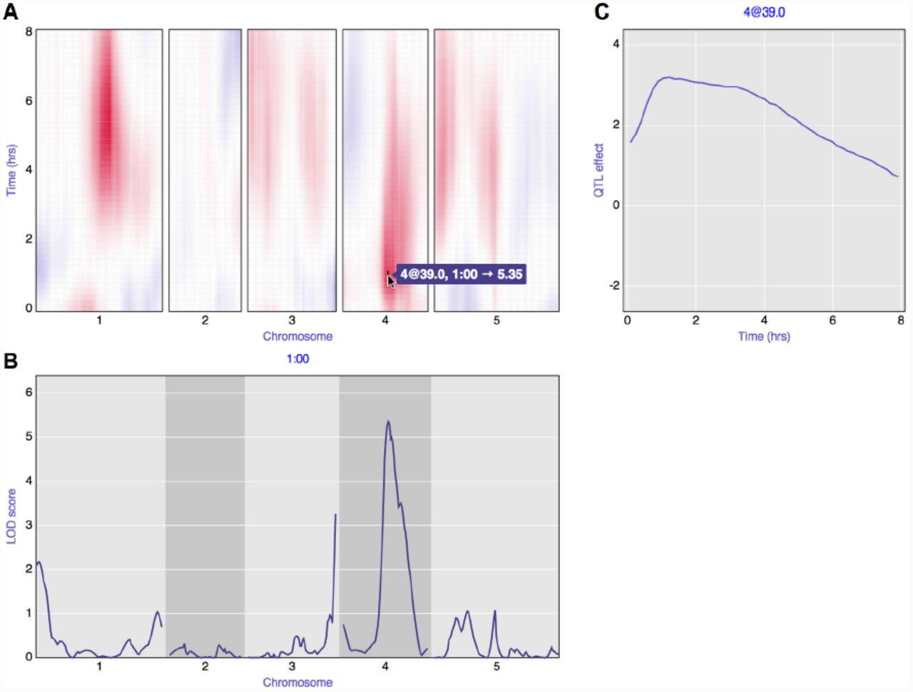 R/qtlcharts: interactive graphics for quanative trait locus ... on