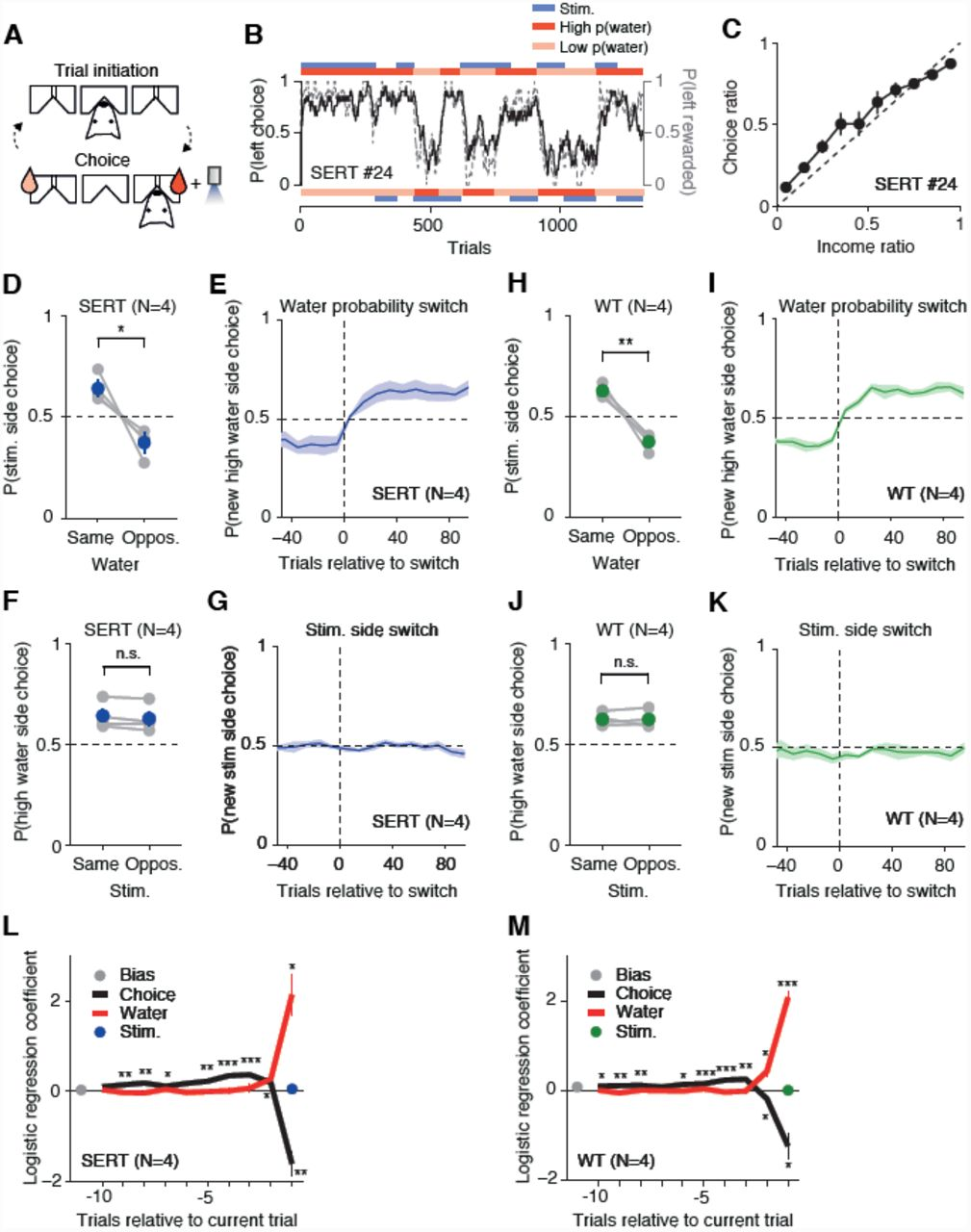 Activation of dorsal raphe serotonergic neurons promotes persistent