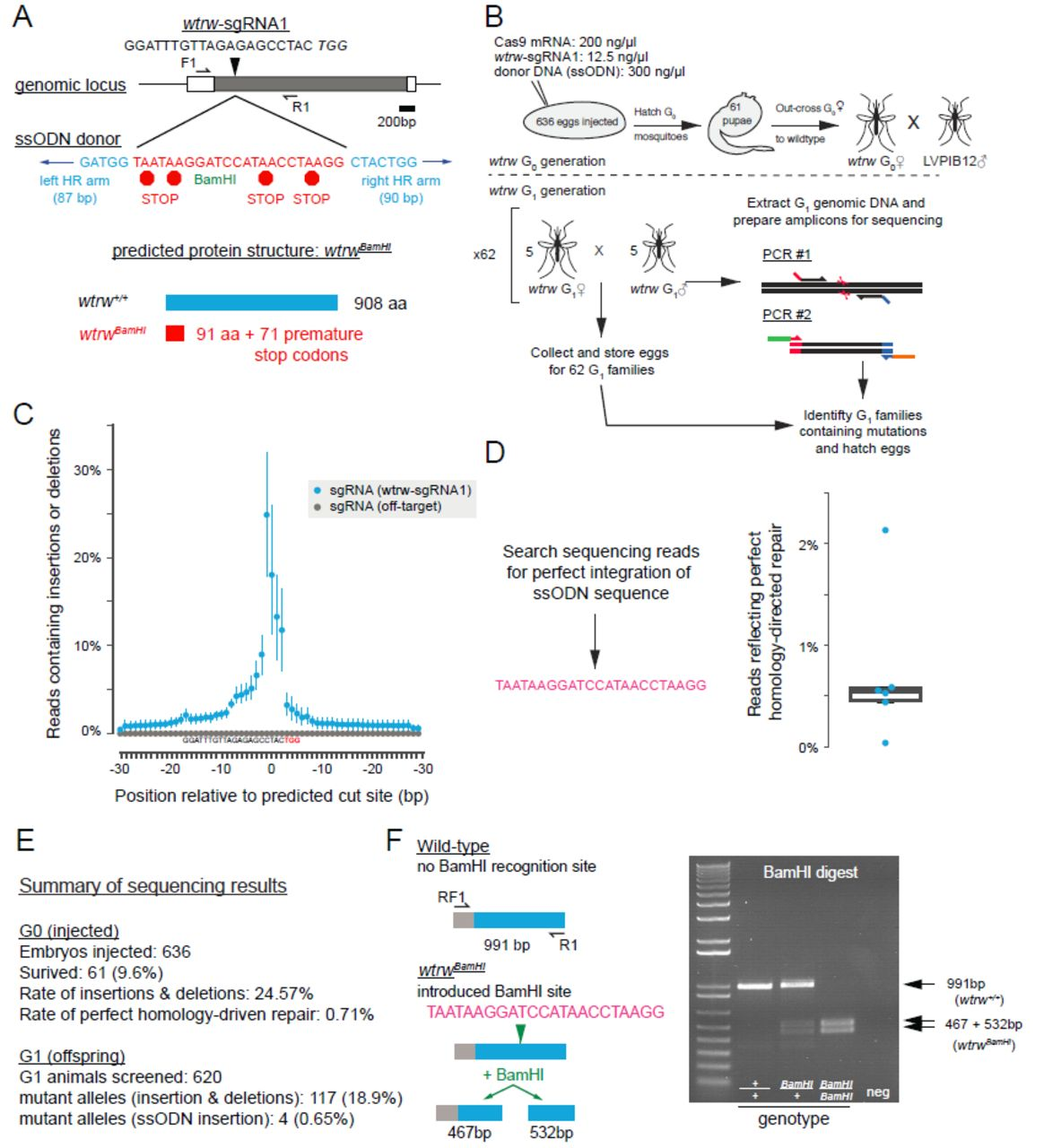 Genome-engineering with CRISPR-Cas9 in the mosquito Aedes