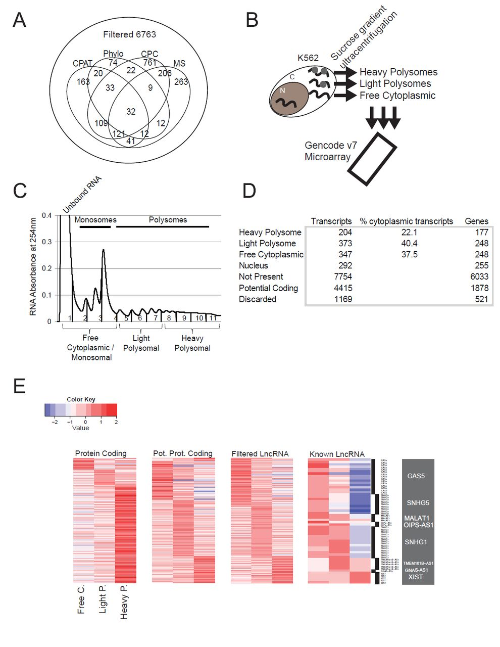Widespread localisation of lncRNA to ribosomes