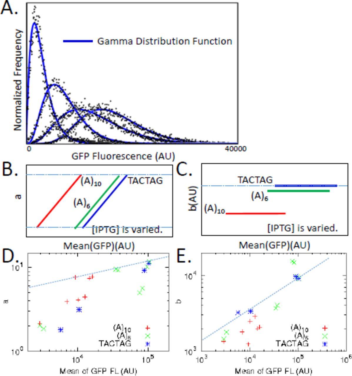 Controlling E  coli gene expression noise | bioRxiv
