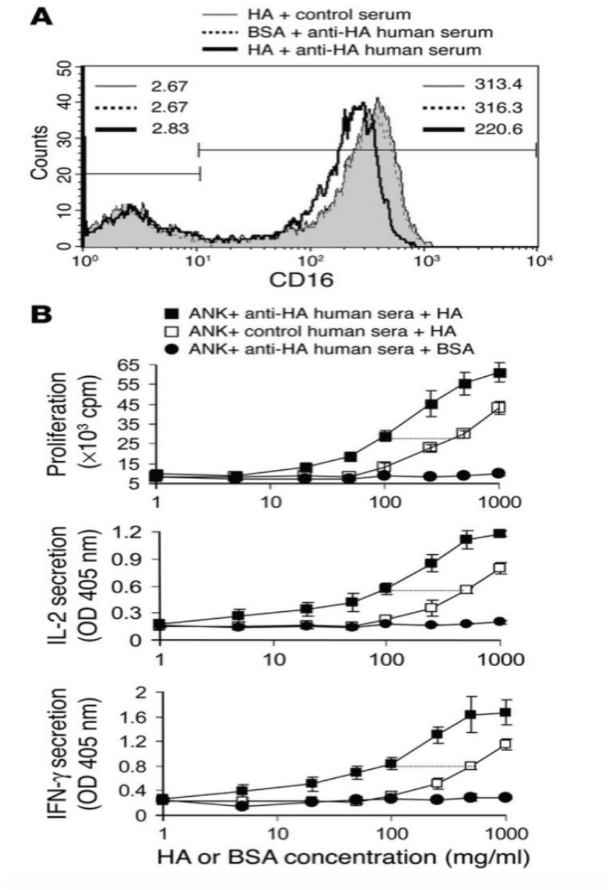 Novel APC-like properties of human NK cells directly regulate T cell