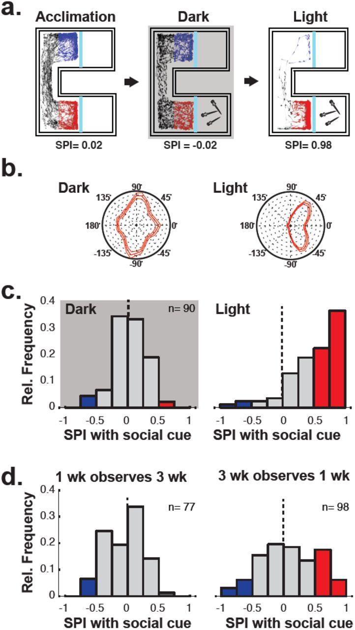 Development of social behaviour in young zebrafish | bioRxiv
