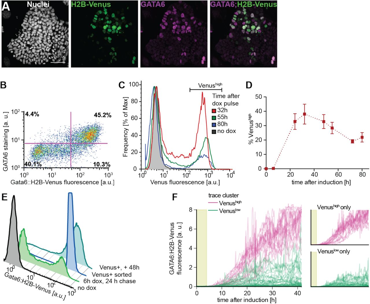 FGF/MAPK signaling sets the switching threshold of a bistable