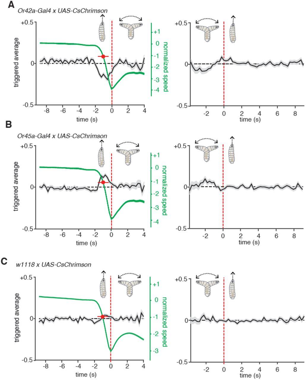 Turning 22 Transition Planning Panel >> Reverse Correlation Analysis Of Navigation Dynamics In Drosophila