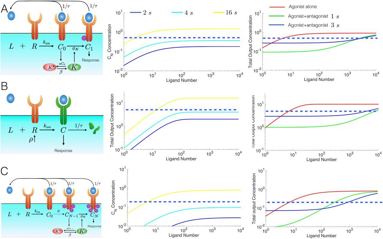The case for absolute ligand discrimination : modeling information