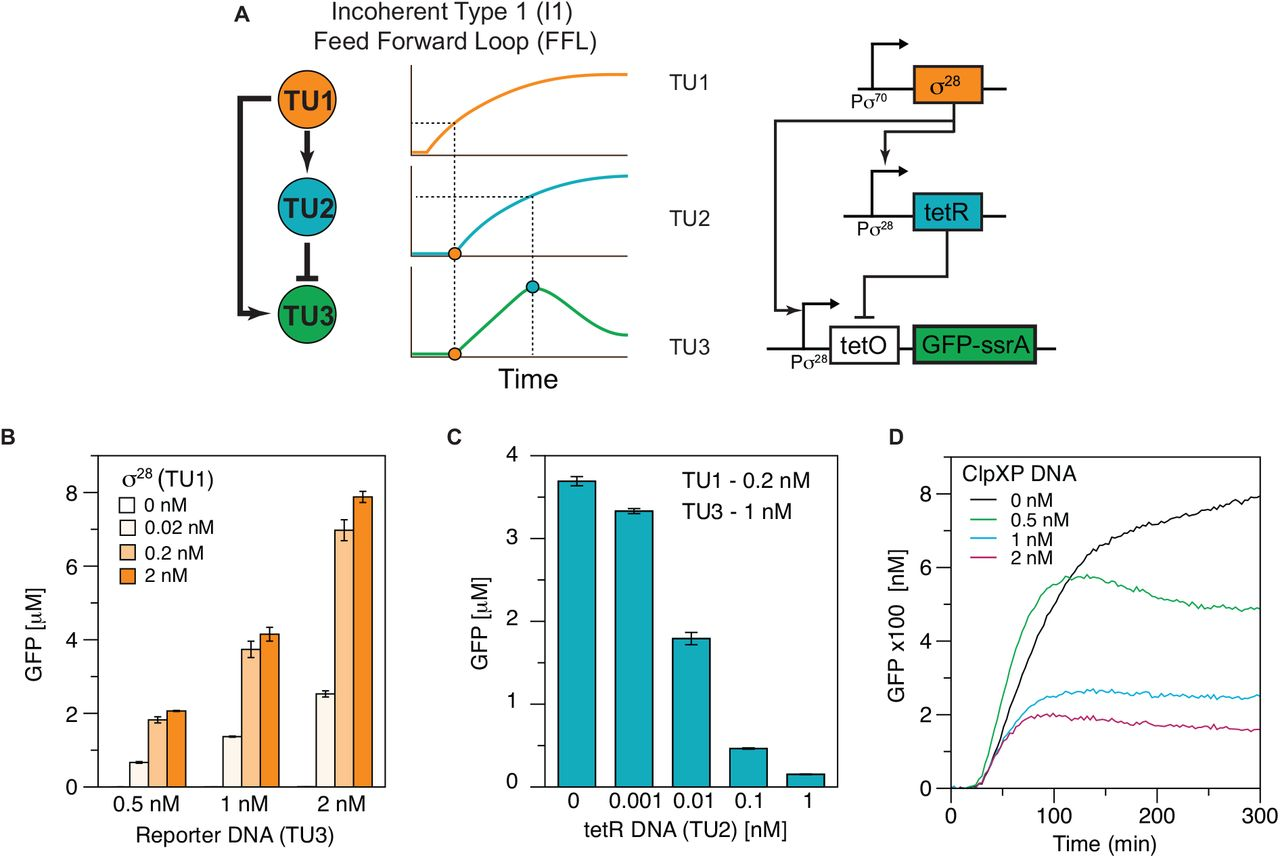 Characterizing and Prototyping Genetic Networks with Cell-Free ... on