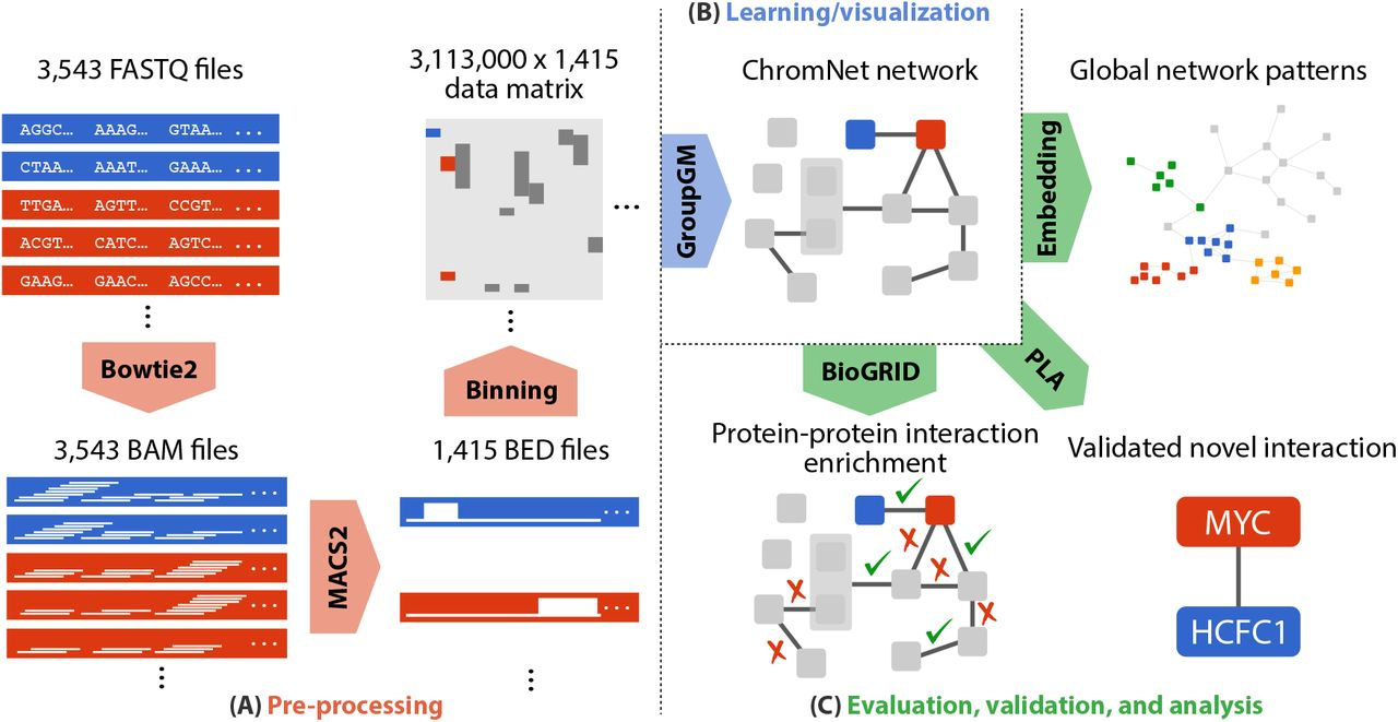 Learning the human chromatin network from all ENCODE ChIP
