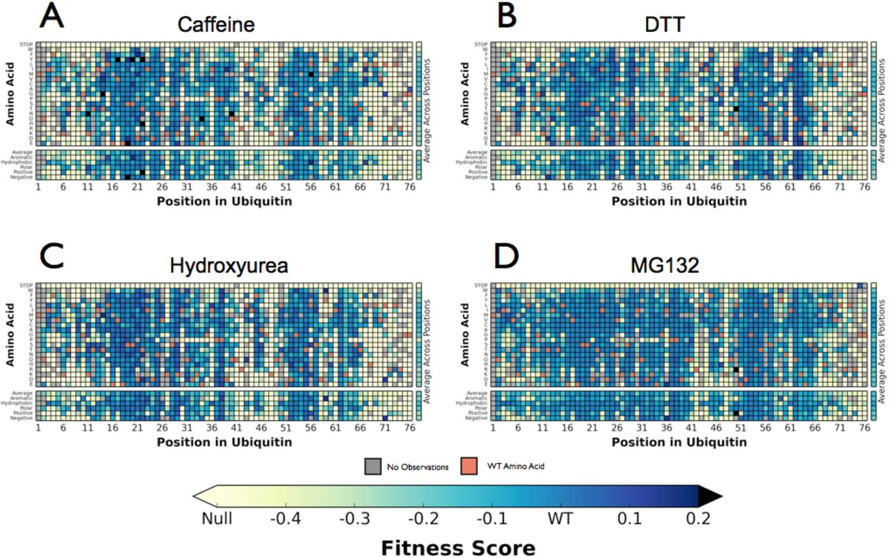 Determination of Ubiquitin Fitness Landscapes Under