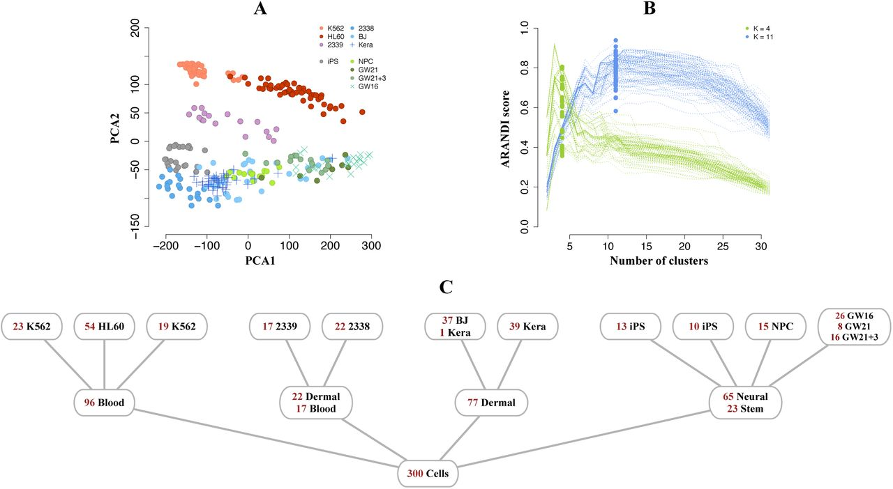 pcaReduce: Hierarchical Clustering of Single Cell Transcriptional