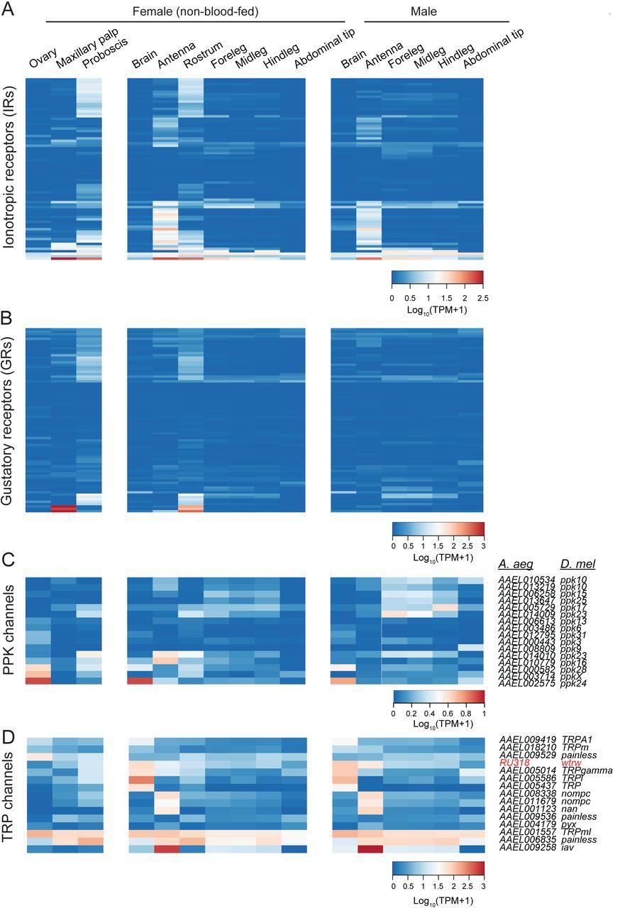 The neurotranscriptome of the Aedes aegypti mosquito | bioRxiv