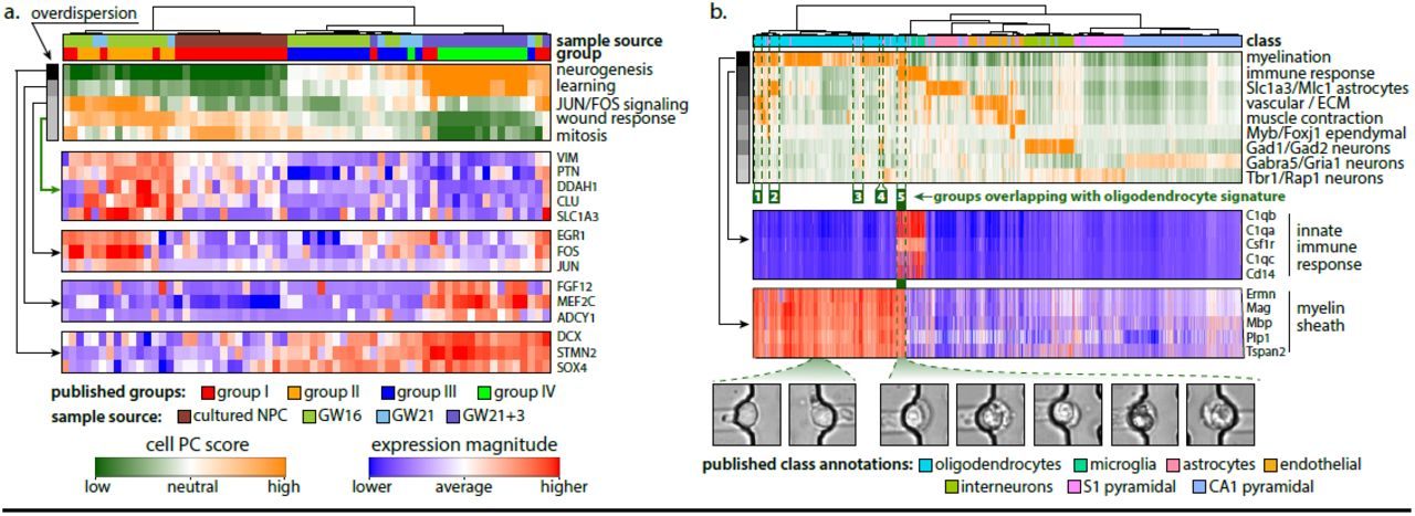 Characterizing transcriptional heterogeneity through pathway and