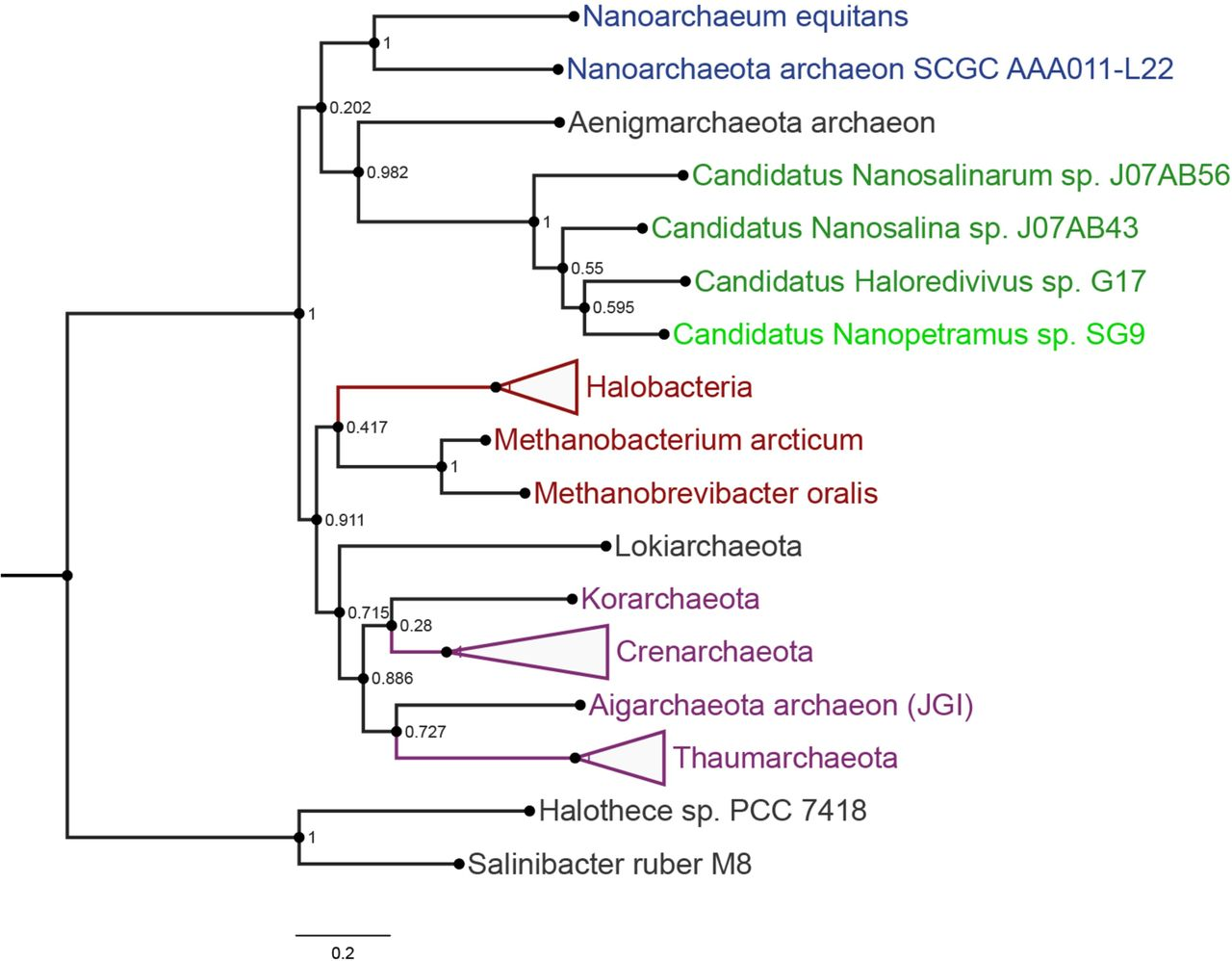 Functional analysis of the archaea, bacteria, and viruses