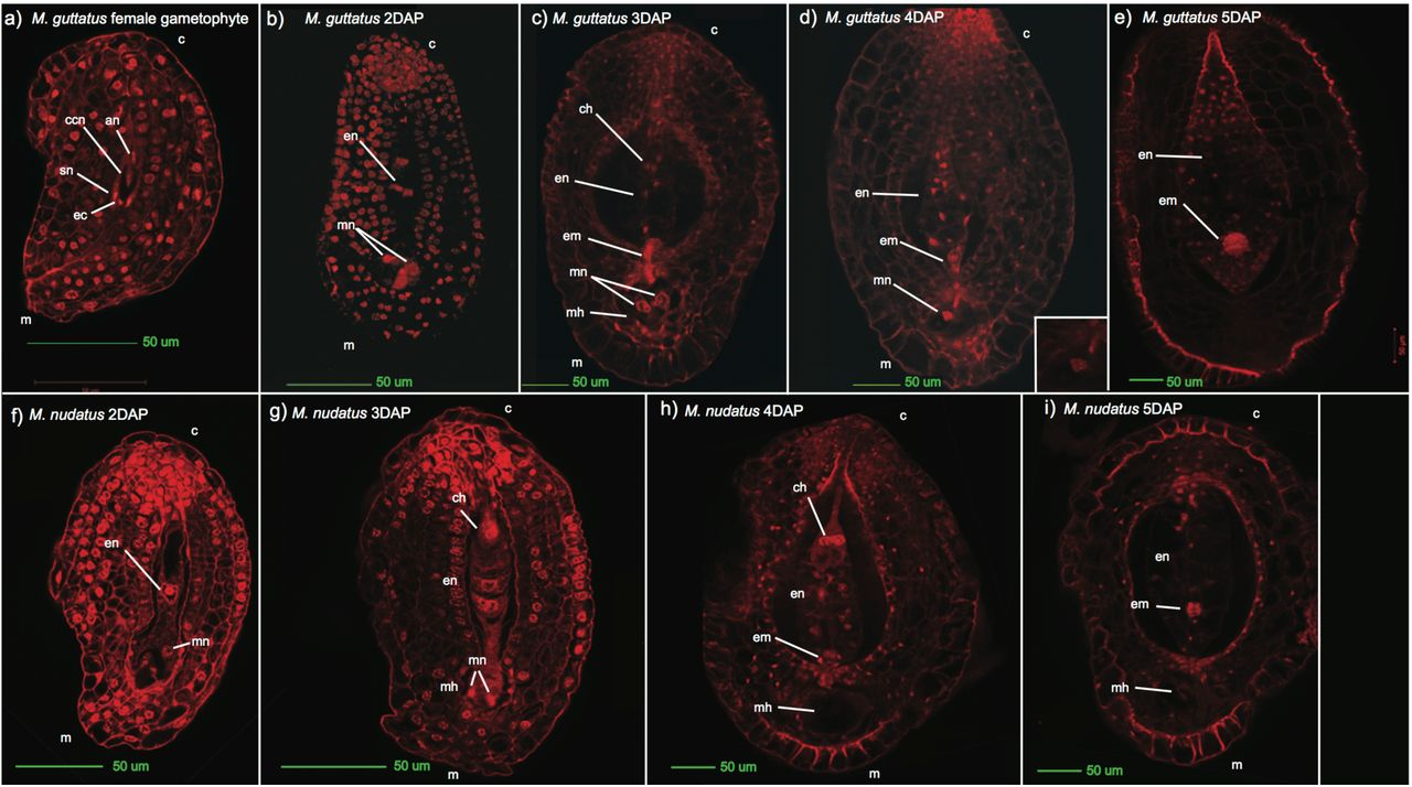 Disruption of endosperm development is a major cause of