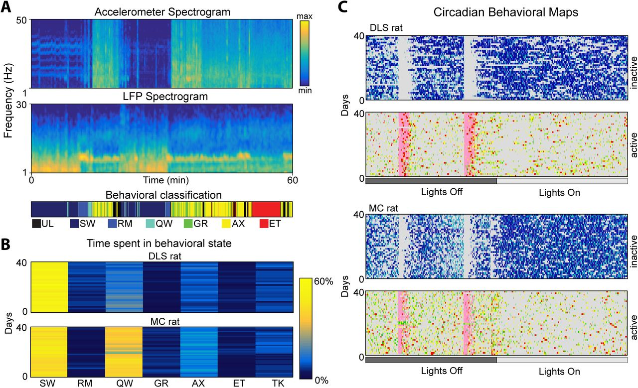 Automated long-term recording and analysis of neural
