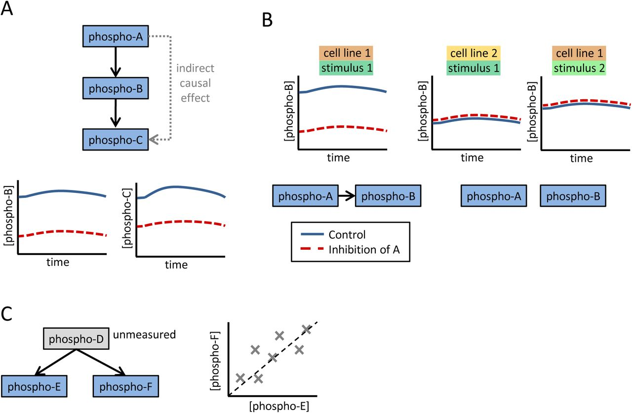 Context-specificity in causal signaling networks revealed by