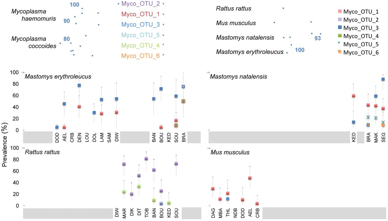 9bfd7ce1ced 16S rRNA amplicon sequencing for epidemiological surveys of bacteria ...