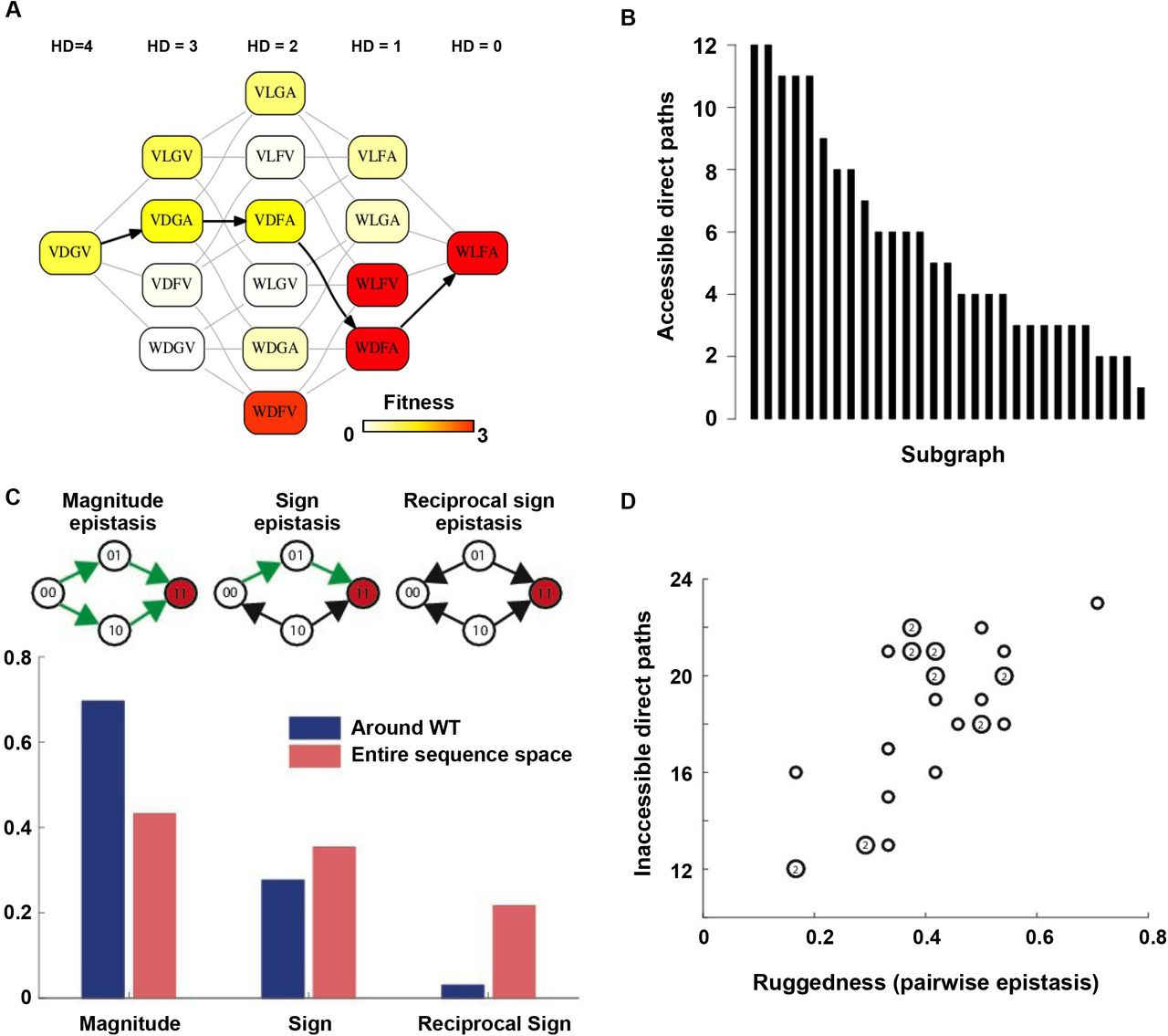 Adaptation in protein fitness landscapes is facilitated by indirect