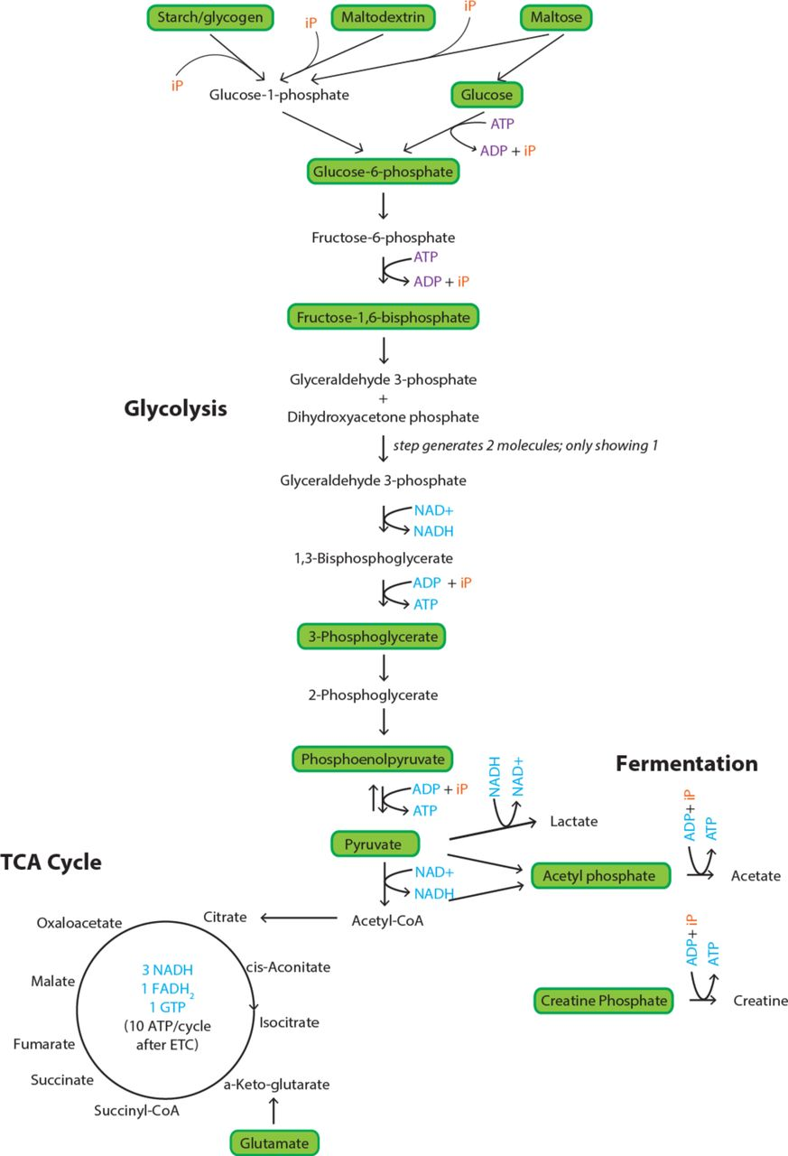 Development of prokaryotic cell-free systems for synthetic