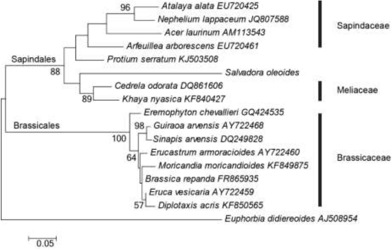 A Surprising Family Legacy Molecular >> Nuclear And Plastid Dna Sequence Based Molecular