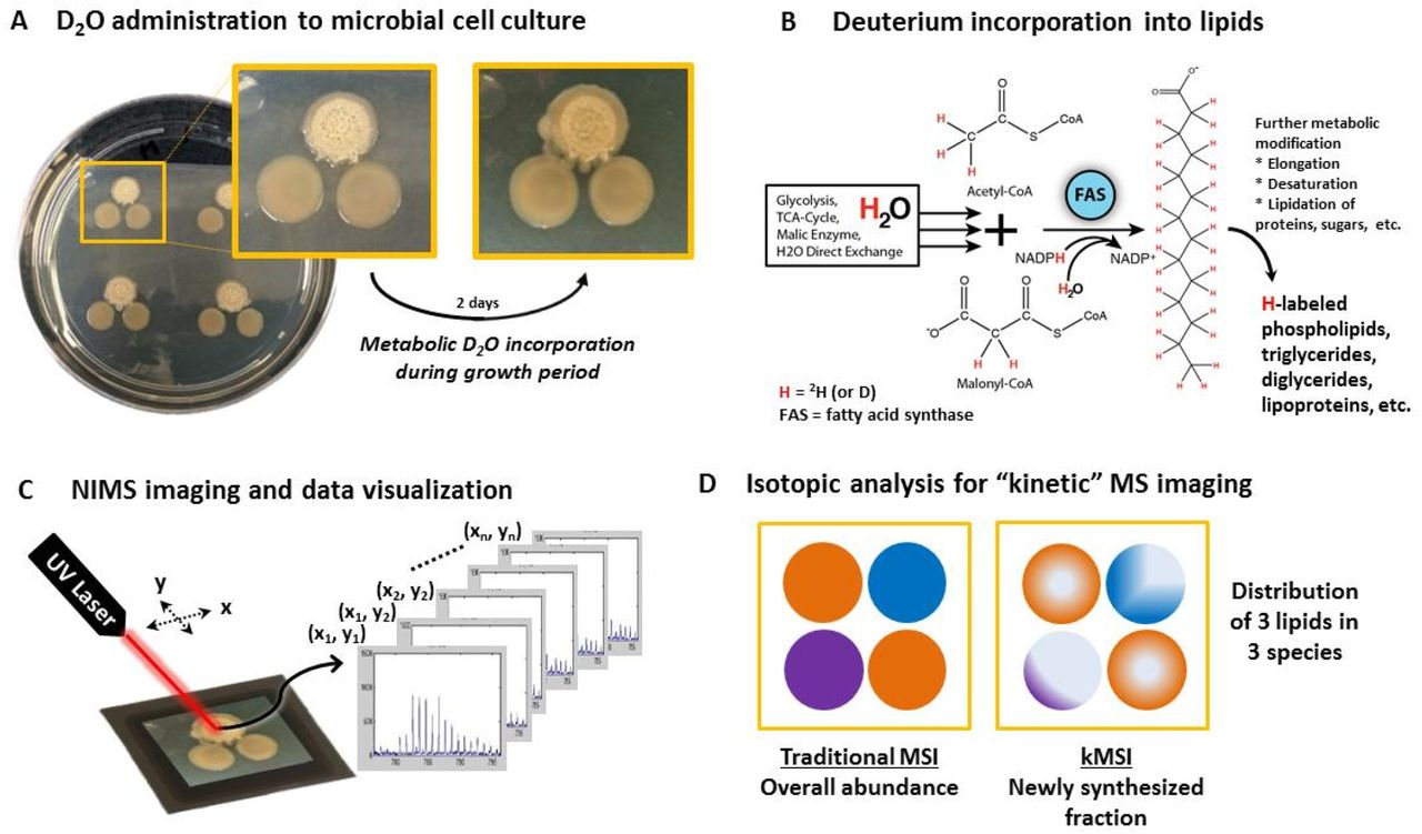 Localizing metabolic synthesis in microbial cultures with