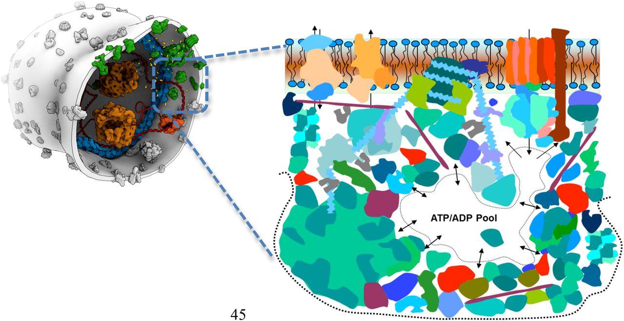 Complex molecular mixtures under cycling gradients as basis
