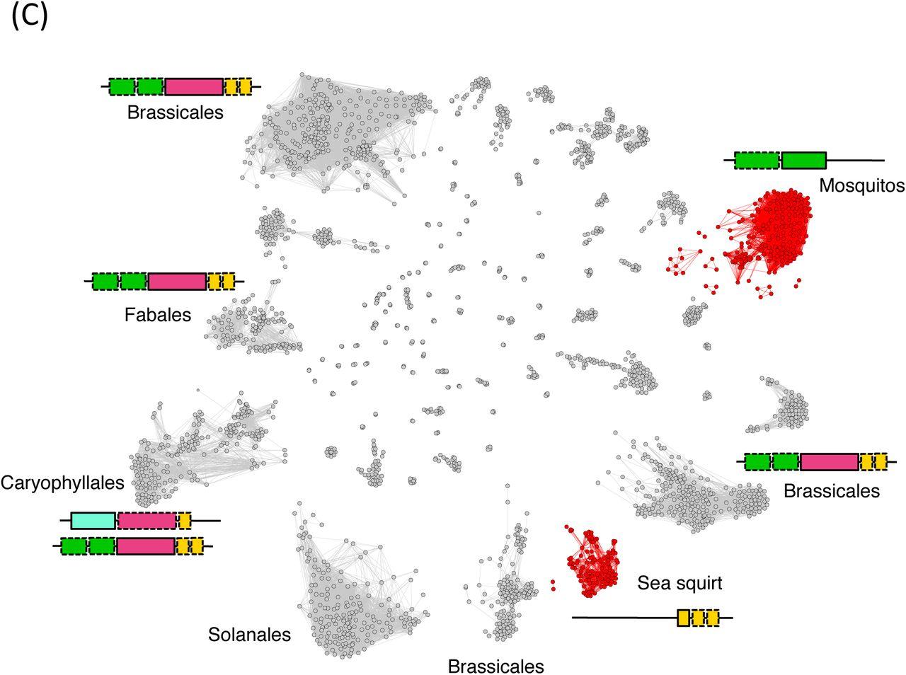 LINES between species: Evolutionary dynamics of LINE-1 ...
