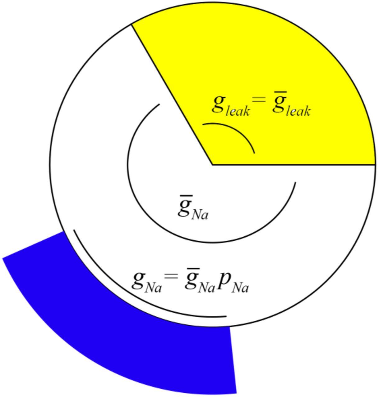 Membrane state diagrams make electrophysiological models