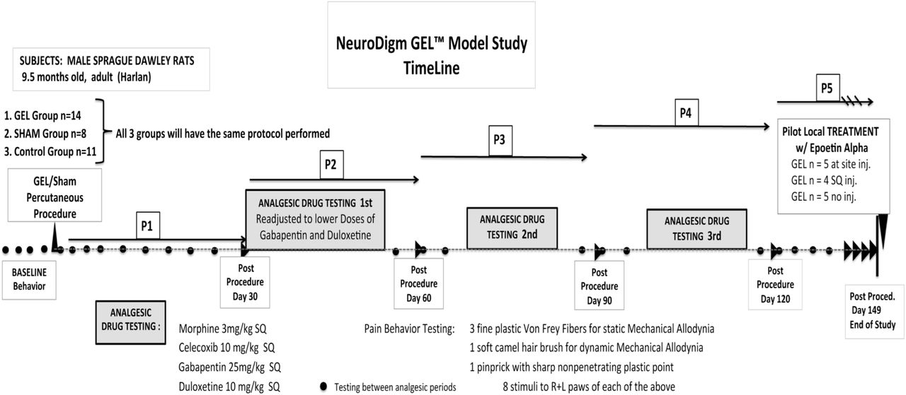 A nonsurgical rat model of an occult chronic neuritis uses