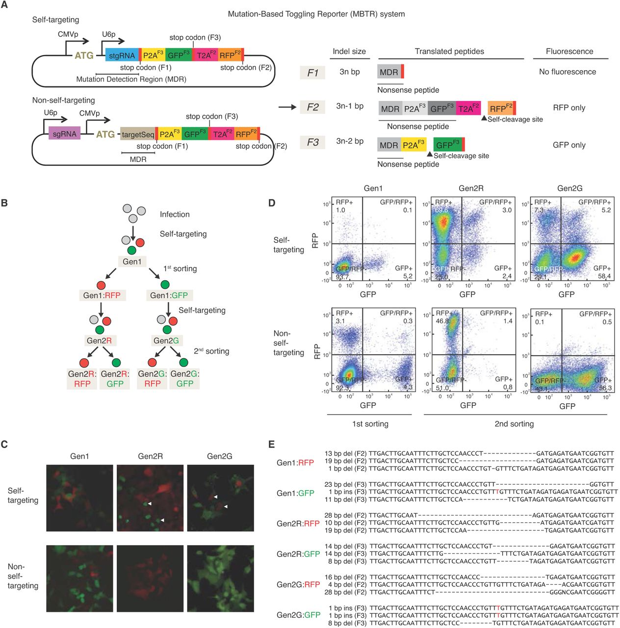 Continuous Genetic Recording with Self-Targeting CRISPR-Cas in Human