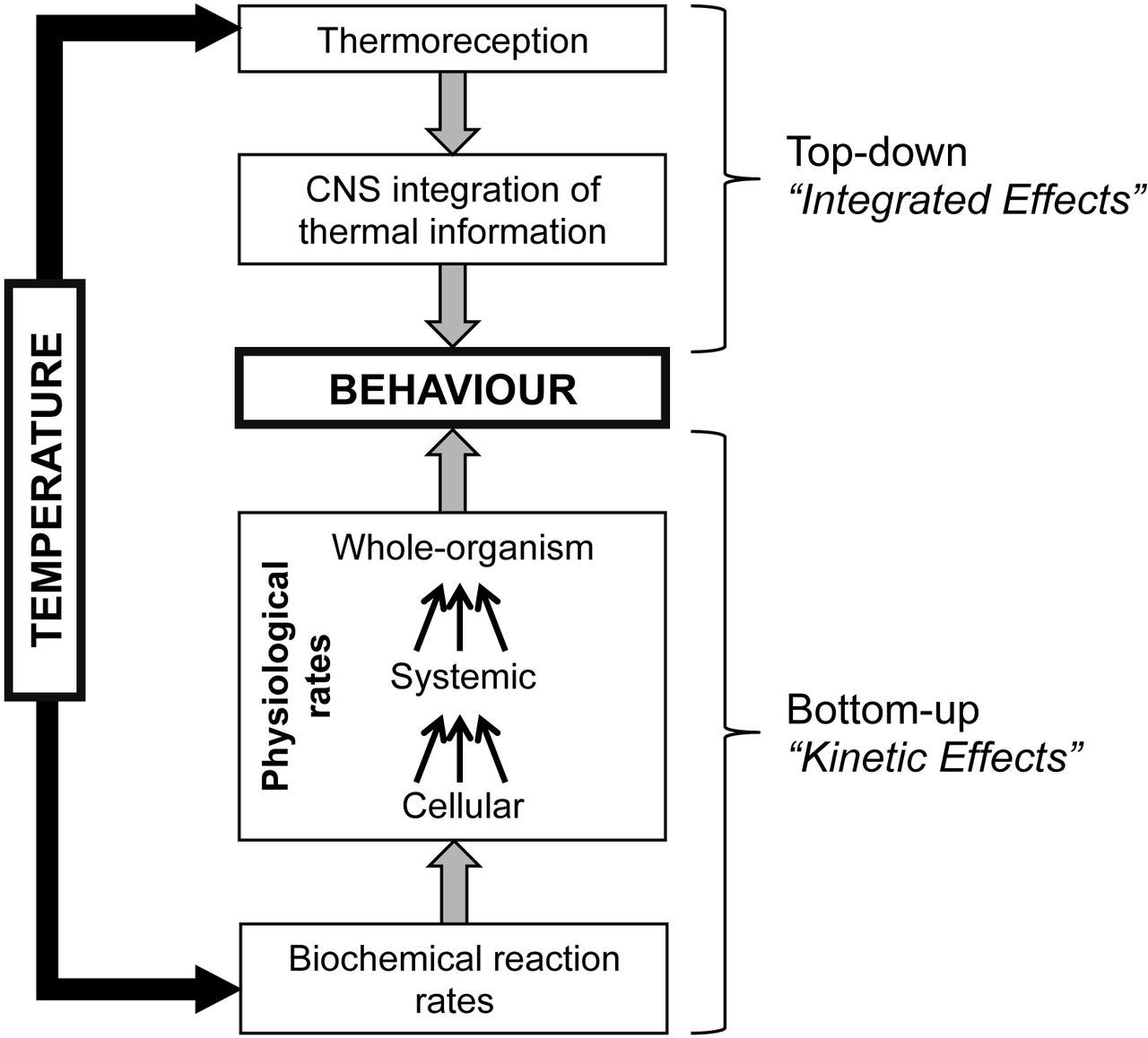 Behavioural effects of temperature on ectothermic animals
