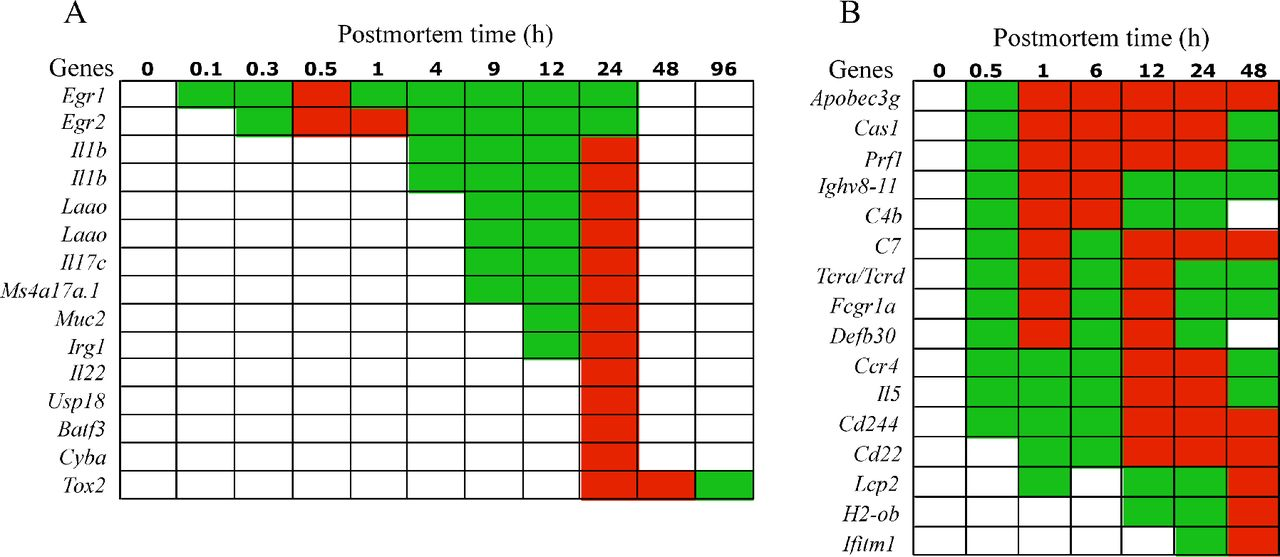 Thanatotranscriptome: genes actively expressed after organismal