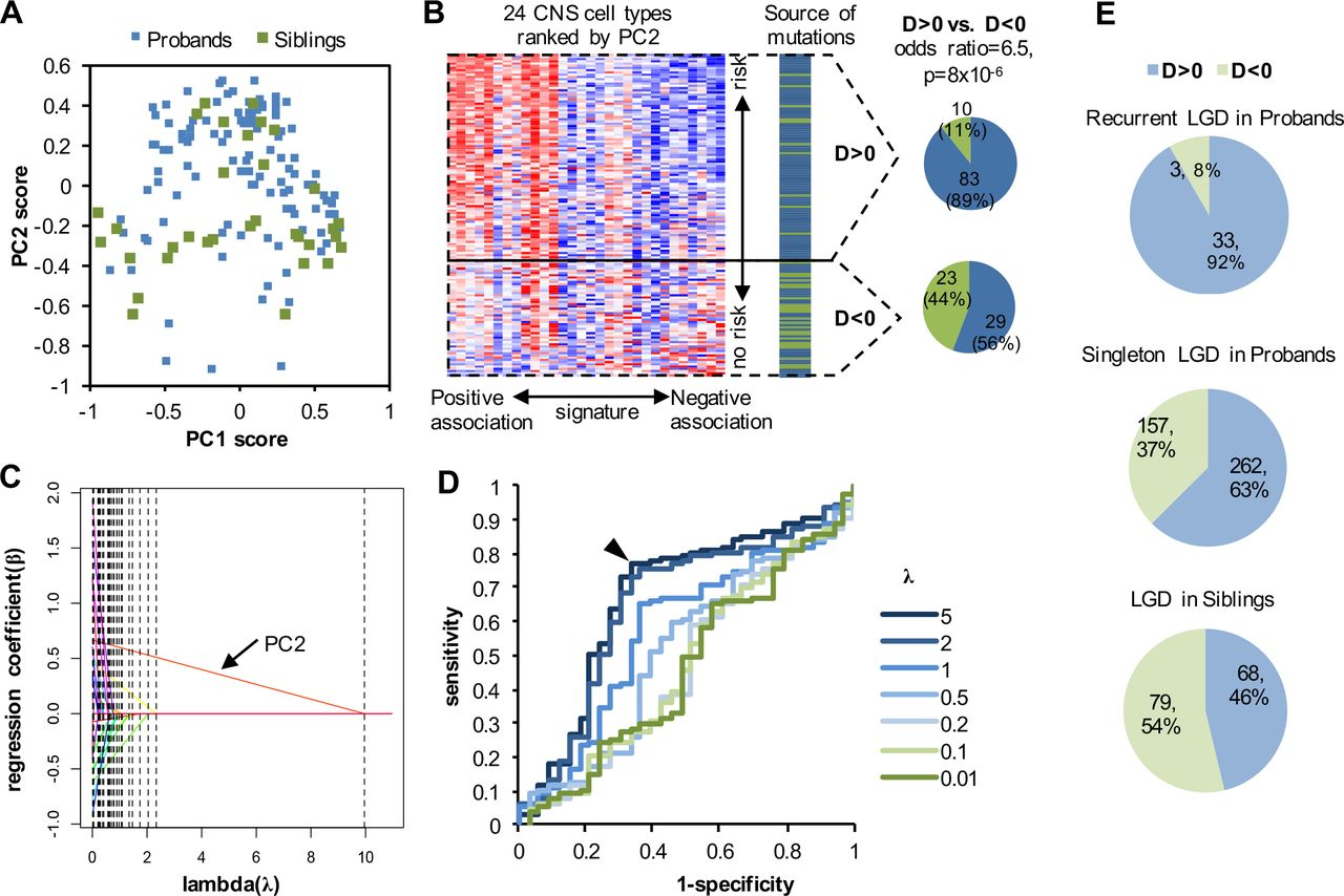 Autism Study Identifies Clear Gene >> A Cell Type Specific Expression Signature Predicts Haploinsufficient