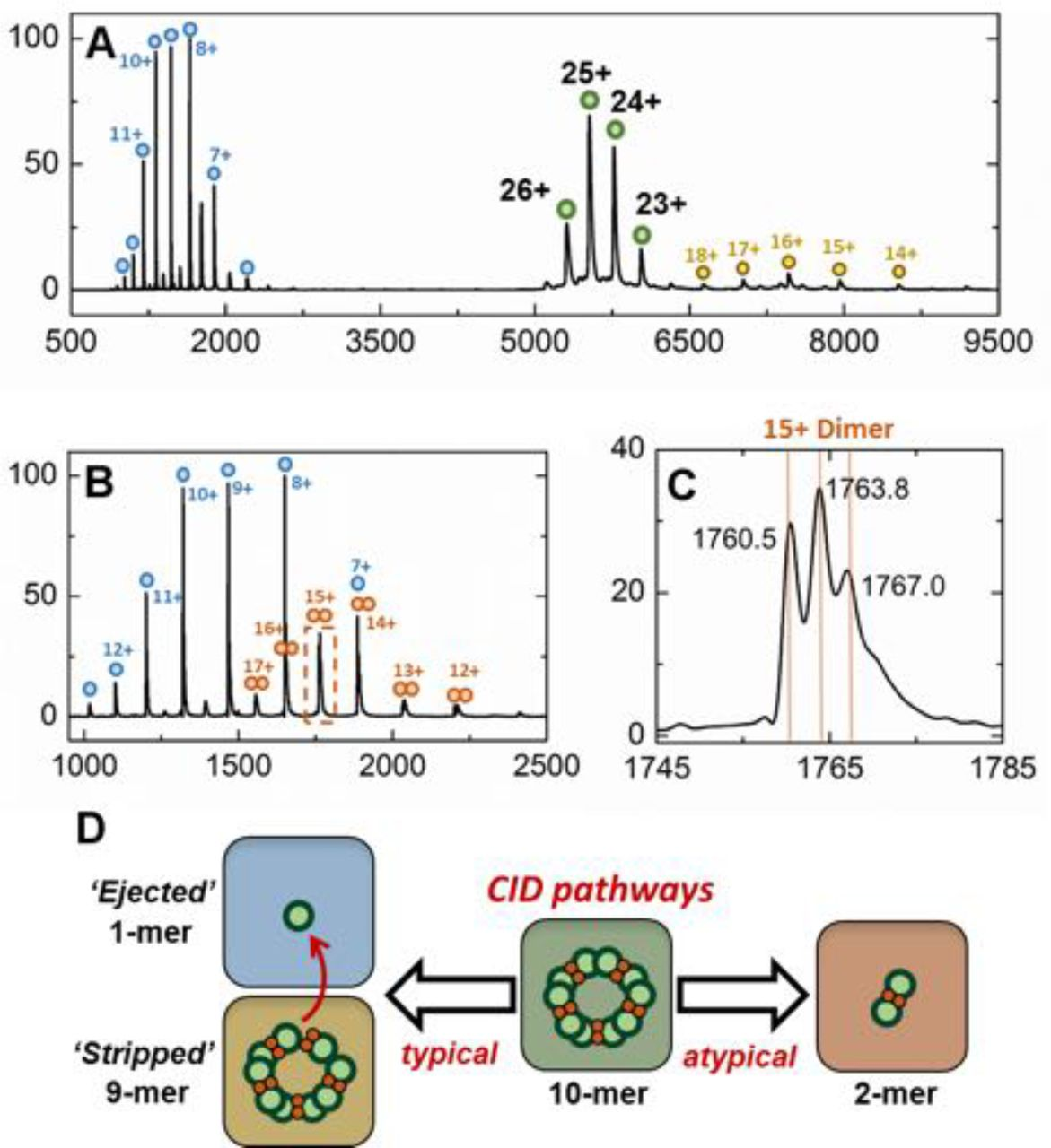 Structural characterization of encapsulated ferritin