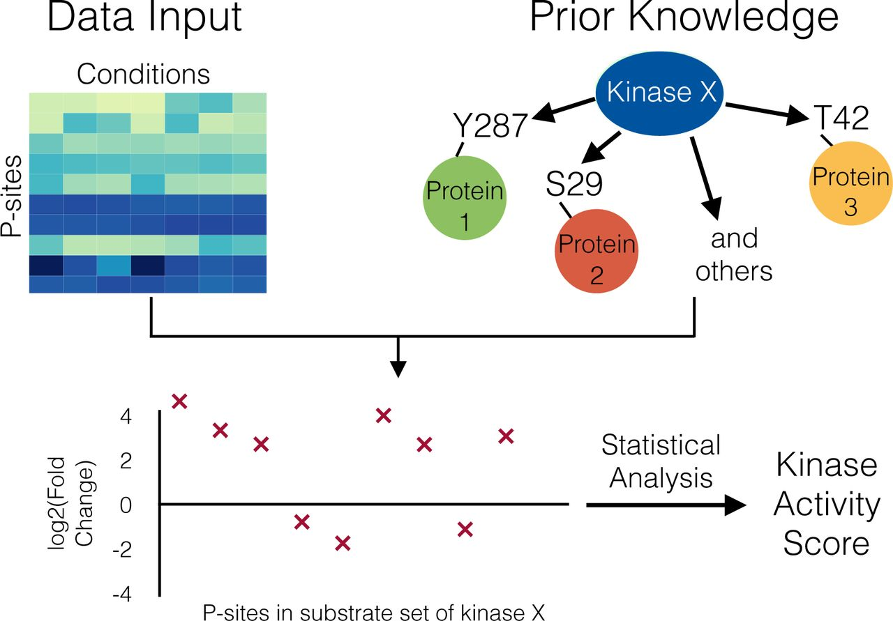 Phosphoproteomics-based Profiling of Kinase Activities in