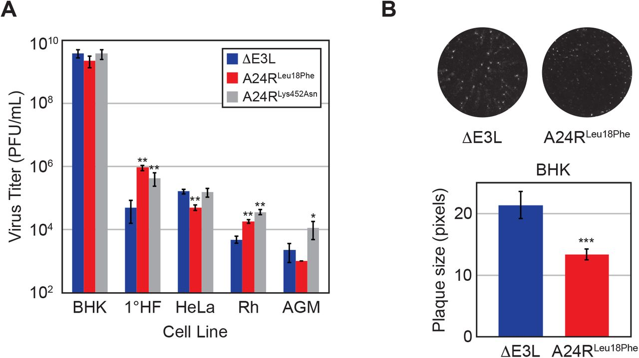 Accelerated selection of a viral RNA polymerase variant during gene