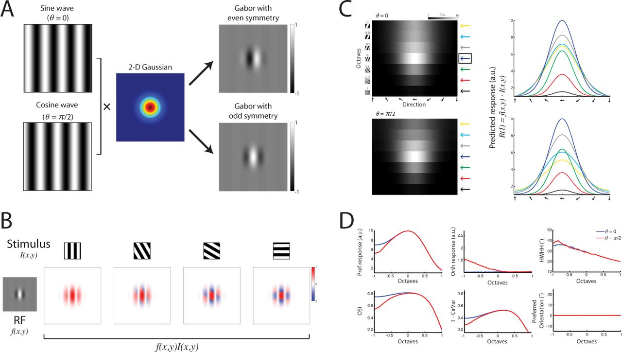 Orientation tuning depends on spatial frequency in mouse