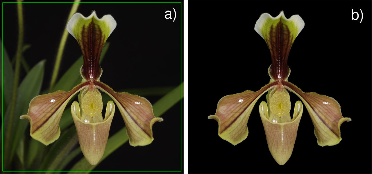 OrchID: a Generalized Framework for Taxonomic Classification