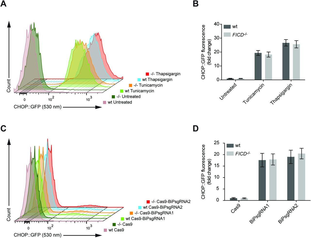 """Wildtype and FICD-deficient (-/-) cells respond indistinguishably to unfolded protein stress in the ER. (A) Flow cytometry analysis of wildtype and FICD-deficient (-/-) CHO-K1 CHOP::GFP UPR reporter cells treated with the UPR-inducing compounds, tunicamycin (2.5 µg/ml) or thapsigargin (0.5 µM), for 16 hours before analysis. Note the equal accumulation of CHOP::GFP-positive cells in tunicamycin- or thapsigargin-treated wildtype and FICD −/− cells. (B) Plot of the median values ± SD of the GFP fluorescent signal of the samples described in """"A"""" from three independent experiments (fold change relative to untreated wildtype cells; n = 3). (C) Flow cytometry analysis of wildtype and FICD-deficient (-/-) CHO-K1 CHOP::GFP UPR reporter cells transiently transfected with plasmids encoding the Cas9 nuclease and single guide RNAs targeting hamster BiP. Note the similar levels of UPR signaling in wildtype and FICD −/− cells. D) Plot of the median values ± SD of the CHOP::GFP fluorescent signal in the transfected subpopulation of the cells shown in """"C"""" from three independent experiments. Transfected cells were identified by co-expression of a mCherry marker (not shown) carried by the Cas9 plasmid (fold change relative to wildtype cells transfected with plasmid DNA encoding Cas9 and mCherry only; n = 3)."""