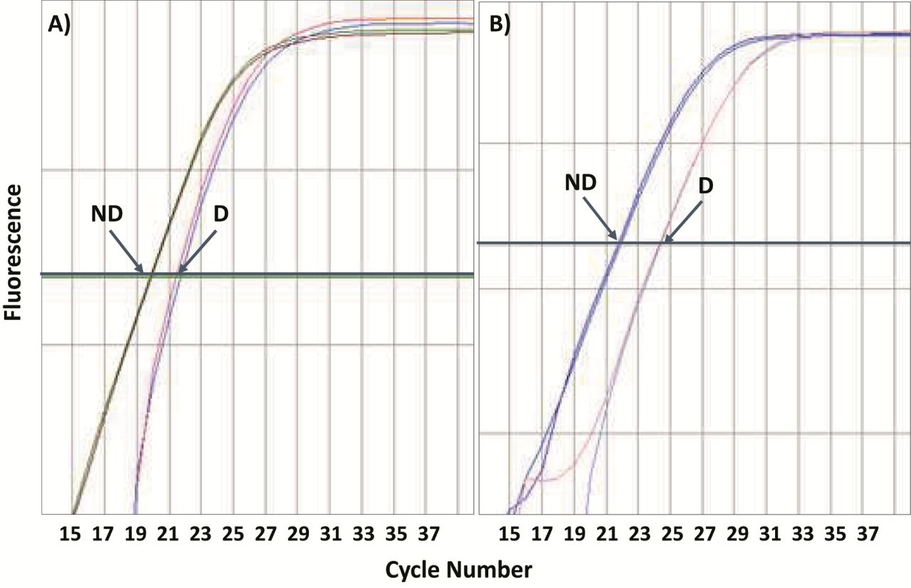 Effect of MspJI treatment on the real time amplification of genomic templates. qPCR reactions were performed using murine genomic DNA digested (D) or not digested (ND) with MspJI. The target sequences contained 14 (A) or none (B) CpG sites. The curves are representative of 12 independent experiments performed in duplicates.
