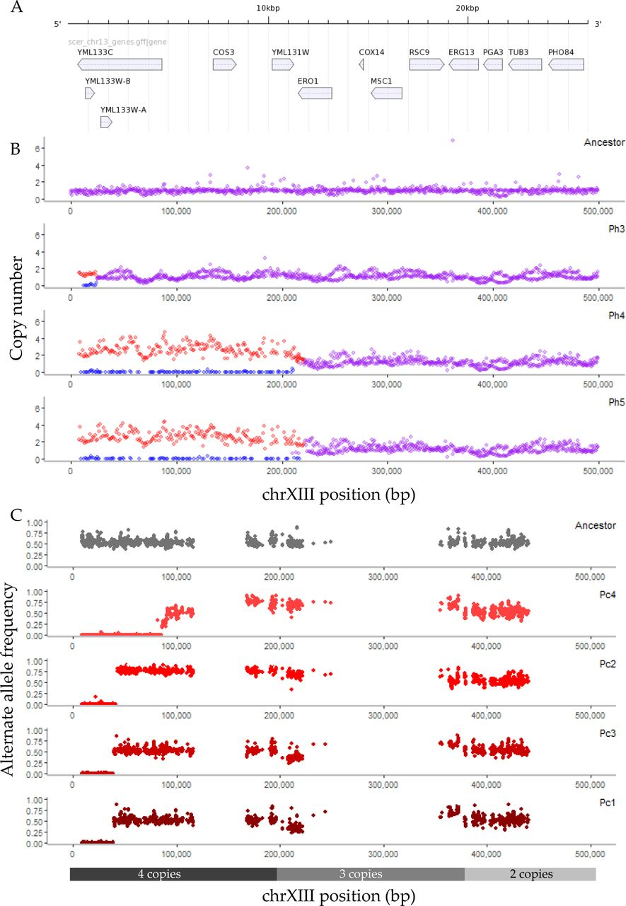 Selection on heterozygosity drives adaptation in intra- and